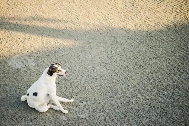Weißer hund, der am abend am strand sitzt