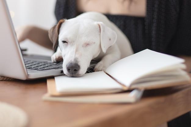 Weißer hund, der auf dem tisch schläft