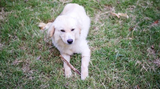 Weißer hund, der auf einem gras sitzt.