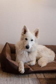 Weißer hund, der auf hundebett liegt