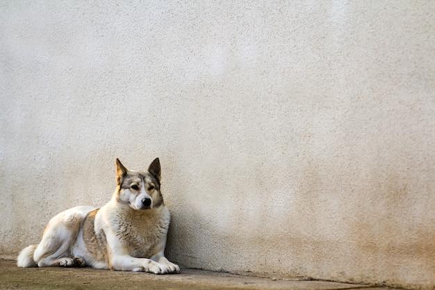 Weißer hund, der nahe alter hausmauer sitzt