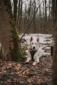 Weißer hund in einem schneewald