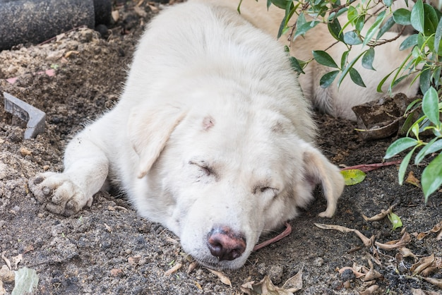 Weißer hund schlafen
