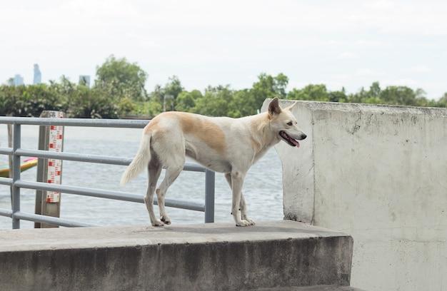 Weißer hund steht am tag des guten wetters