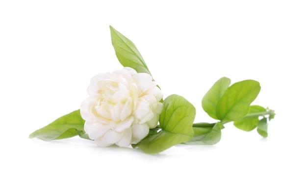 Weißer jasmin auf weißem isoliertem hintergrund.