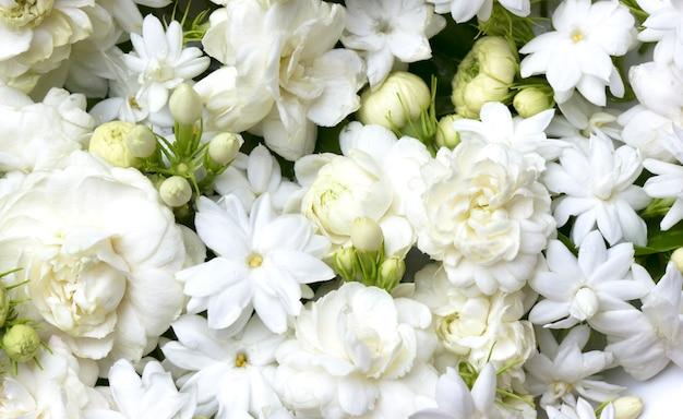 Weißer jasmin blüht frische blumen