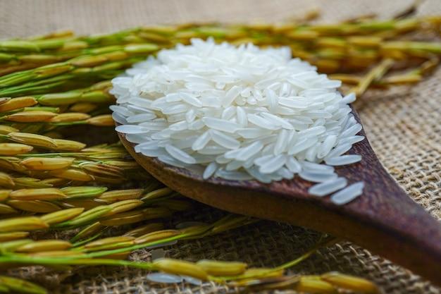 Weißer jasminreis mit goldkorn vom landwirtschaftsbauernhof.
