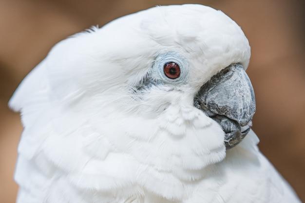 Weißer kakadu papagei in der natur