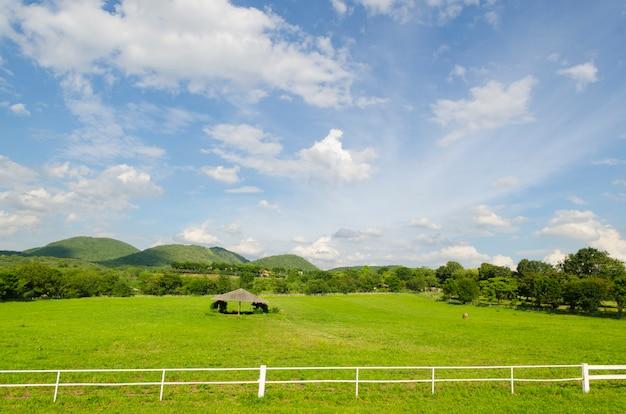 Weißer konkreter zaun auf dem pferdebauernhofgebiet