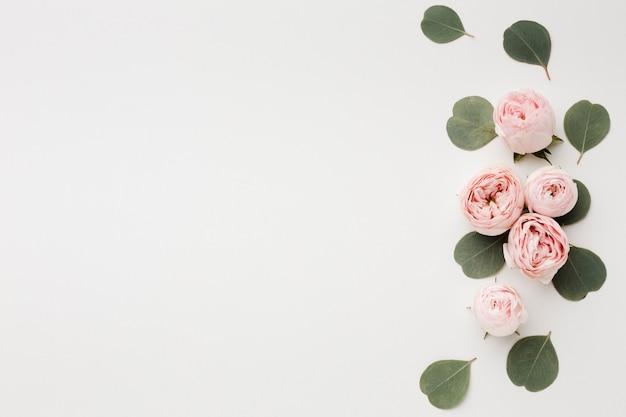 Weißer kopienraumhintergrund mit rosenanordnung