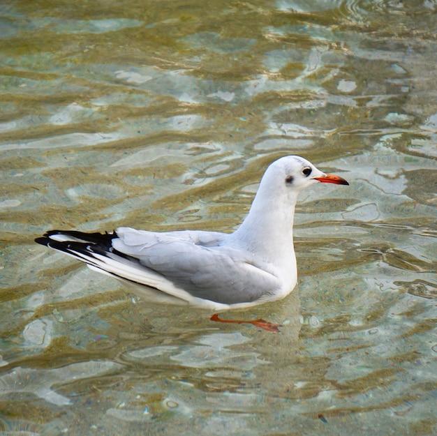 Weißer möwenvogel