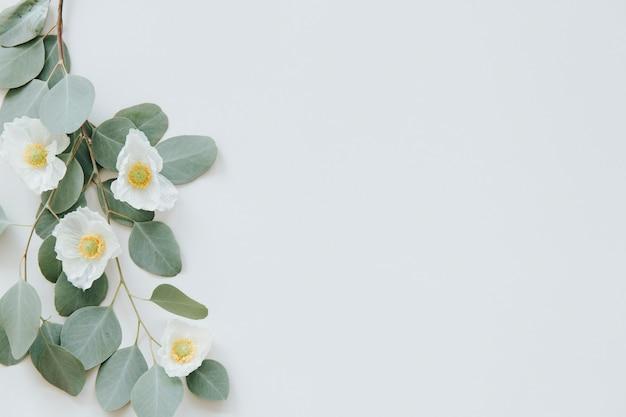 Weißer mohn mit eukalyptusblättern hintergrund