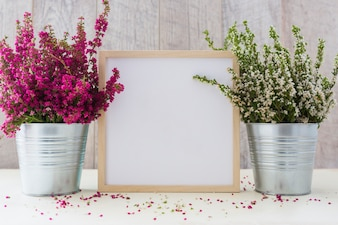 Weißer quadratischer Fotorahmen zwischen den rosa und weißen Blumen in einem Aluminiumtopf