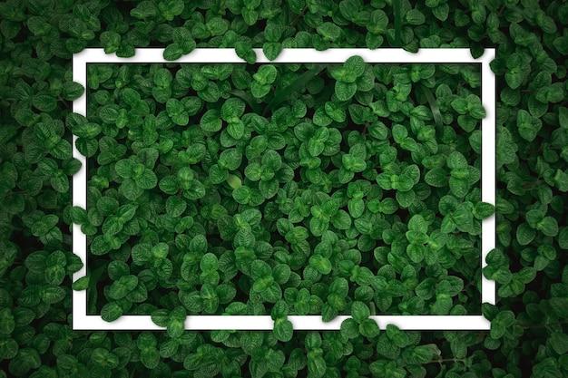 Weißer quadratischer rahmen auf flachem grünem minzblattbeschaffenheitshintergrund der draufsicht