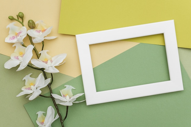 Weißer rahmen und niederlassung der orchideenblume auf geometrischem papierhintergrund der grünen schatten.