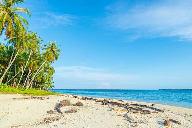 Weißer sandstrand mit kokospalmen türkisblaues wasserkorallenriff, tropisches reiseziel, wüstenstrand keine menschen