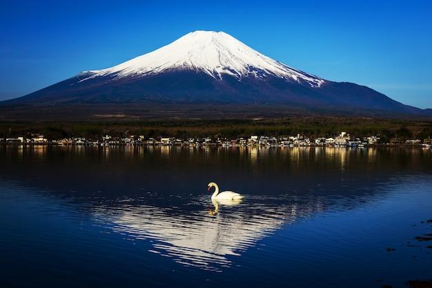 Weißer schwan auf yamanaka see