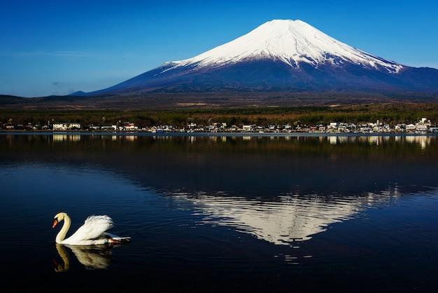 Weißer schwanschwimmen auf yamanaka see mit berg fuji