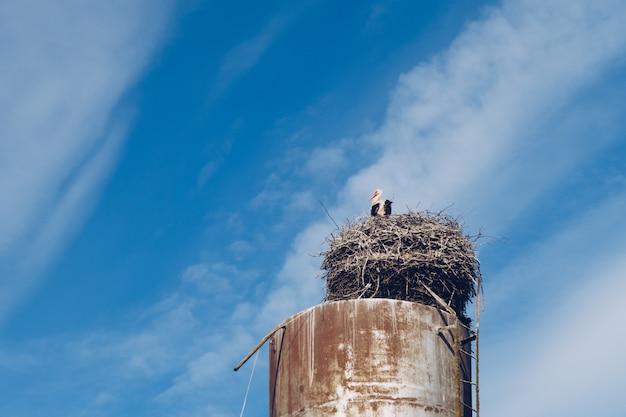 Weißer storchvogel im nest auf einem wasserturm auf einem blauen bewölkten himmel