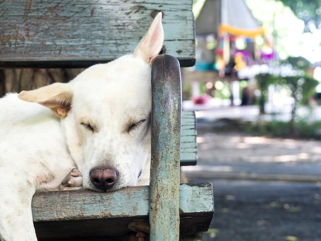 Weißer streunender hund, der auf einem stuhl in einem garten liegt.