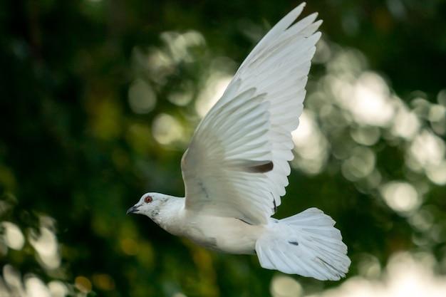 Weißer taubenvogel, der im himmel fliegt