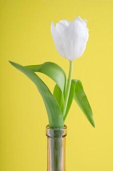 Weißer tulpenblumenkopf mit grünen blättern in der lila glasflasche gegen gelben hintergrund