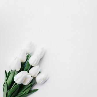 Weißer tulpenblumenstrauß auf weißem hintergrund