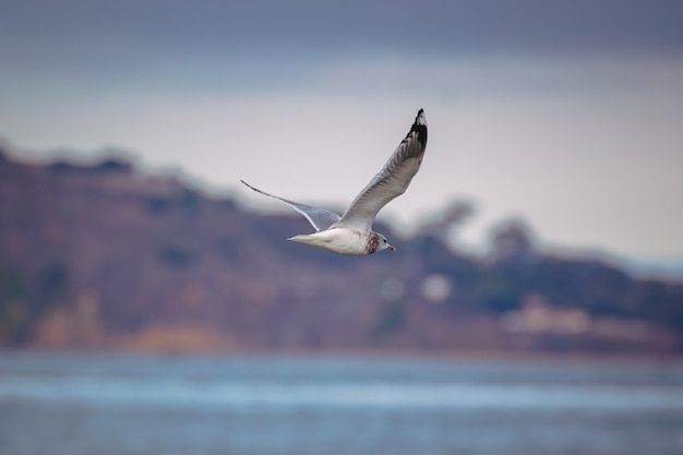 Weißer und schwarzer vogel, der tagsüber über das meer fliegt