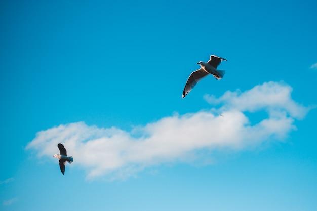 Weißer und schwarzer vogel, der tagsüber unter blauem himmel fliegt