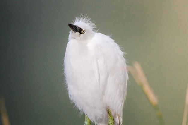 Weißer vogel auf braunem ast