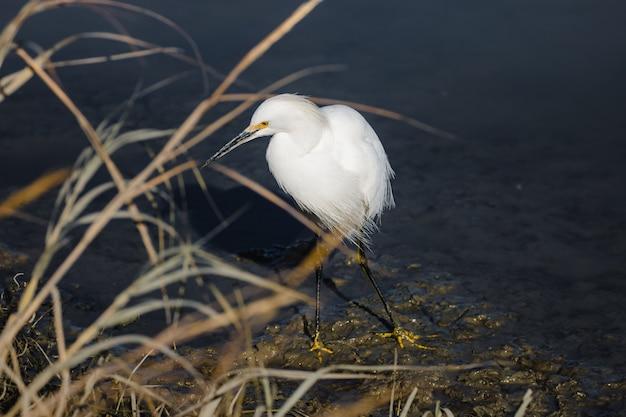 Weißer vogel auf braunem gras