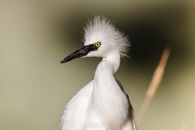 Weißer vogel auf braunem holzstab