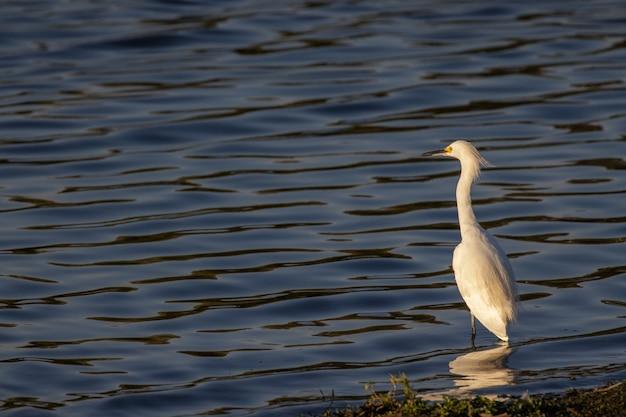 Weißer vogel auf dem wasser während des tages