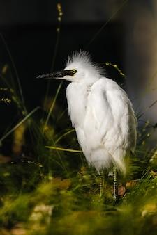 Weißer vogel auf grünem gras