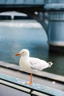 Weißer vogel in der stadt