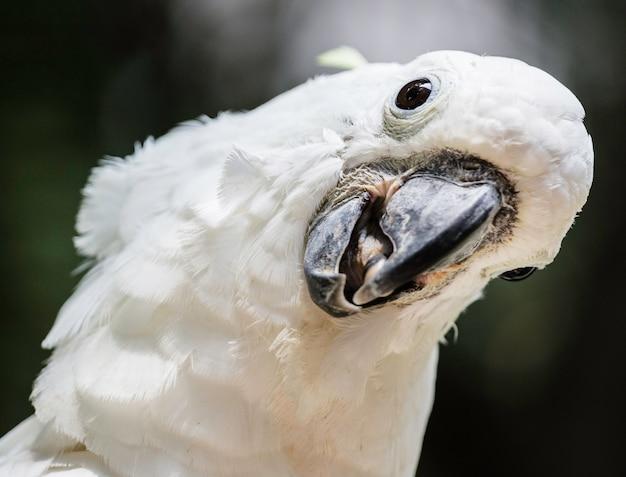 Weißer vogel papageien kakadu kopf