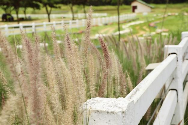 Weißer zaun auf dem bauernhof