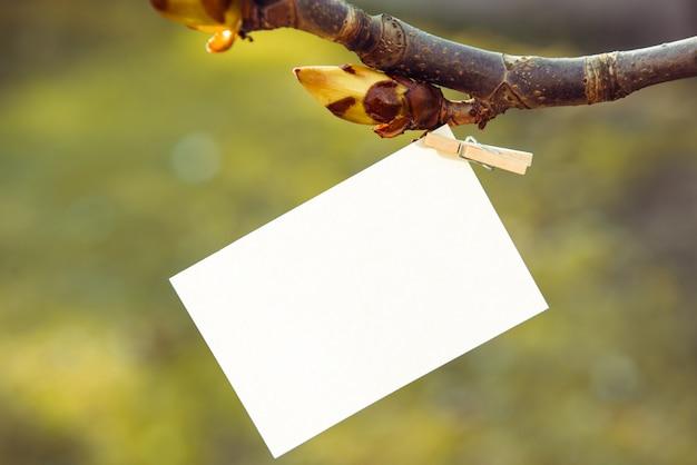 Weißes blatt papier auf einer wäscheklammer auf einem kastanienzweig