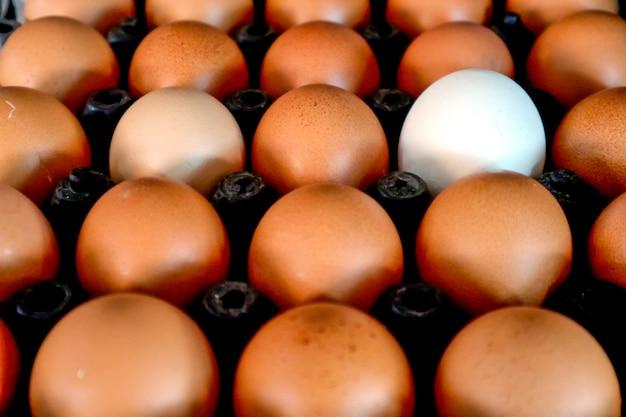 Weißes ei zwischen normalem ei auf kunststoffverpackung