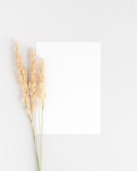 Weißes einladungskartenmodell flach mit drei trockenen pampasgraszweigen