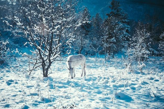 Weißes fohlen auf dem hintergrund einer fabelhaften winterlandschaft heiligabend,