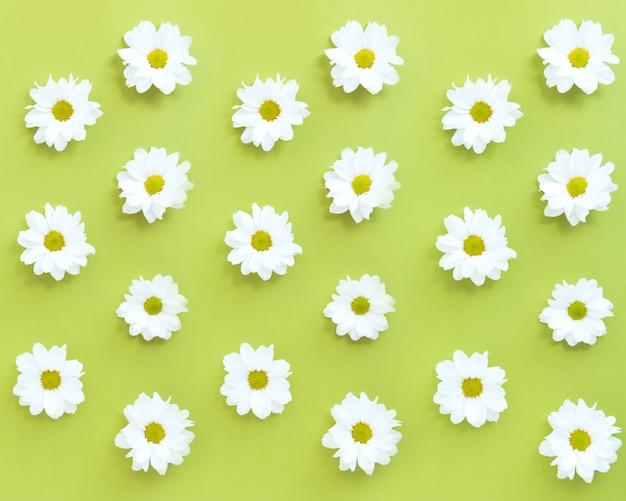 Weißes gänseblümchen-blumenmuster auf grünem hintergrund