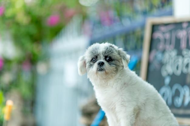 Weißes hundebild, nette fotoaufnahme, liebeshundekonzept