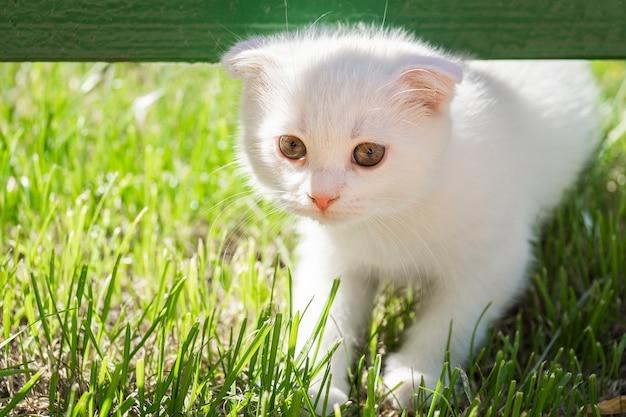 Weißes kätzchen auf dem gras