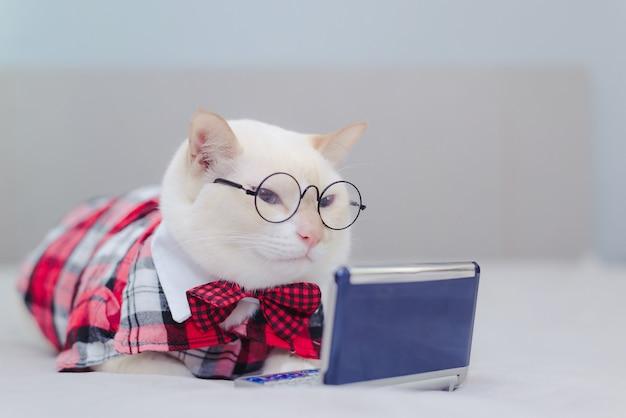 Weißes kätzchen, das auf dem bett betrachtet tablette sitzt. katze, die video im internet schaut