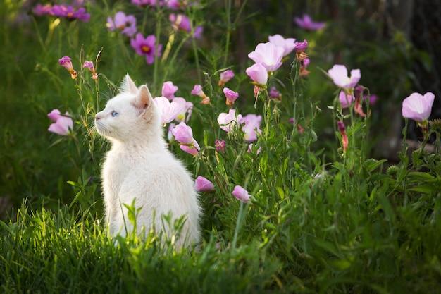 Weißes kätzchen im blumengarten