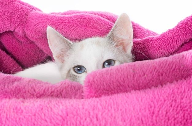 Weißes kätzchen im kissen