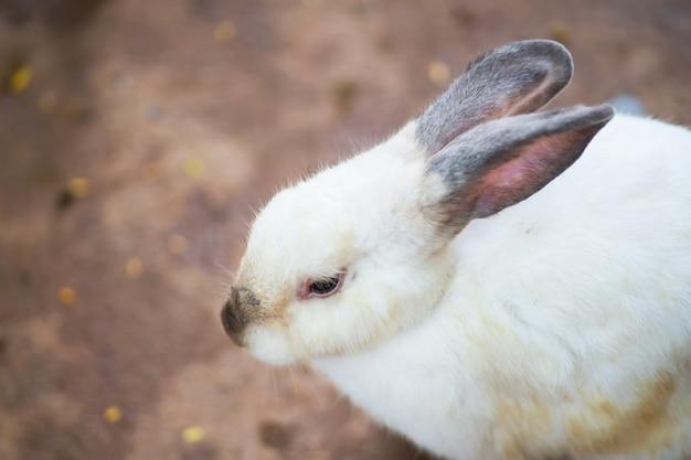 Weißes kaninchen aus den grund