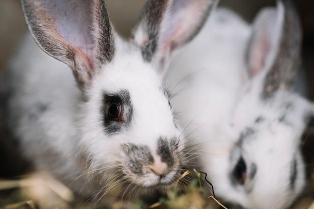 Weißes kaninchen, das gras isst