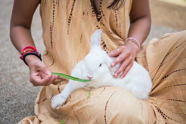 Weißes kaninchen füttern morning glory gemüse auf dem schoß der frau. süßes haustier isst futter